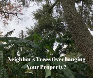 Neighbor's Trees Overhanging Your Property